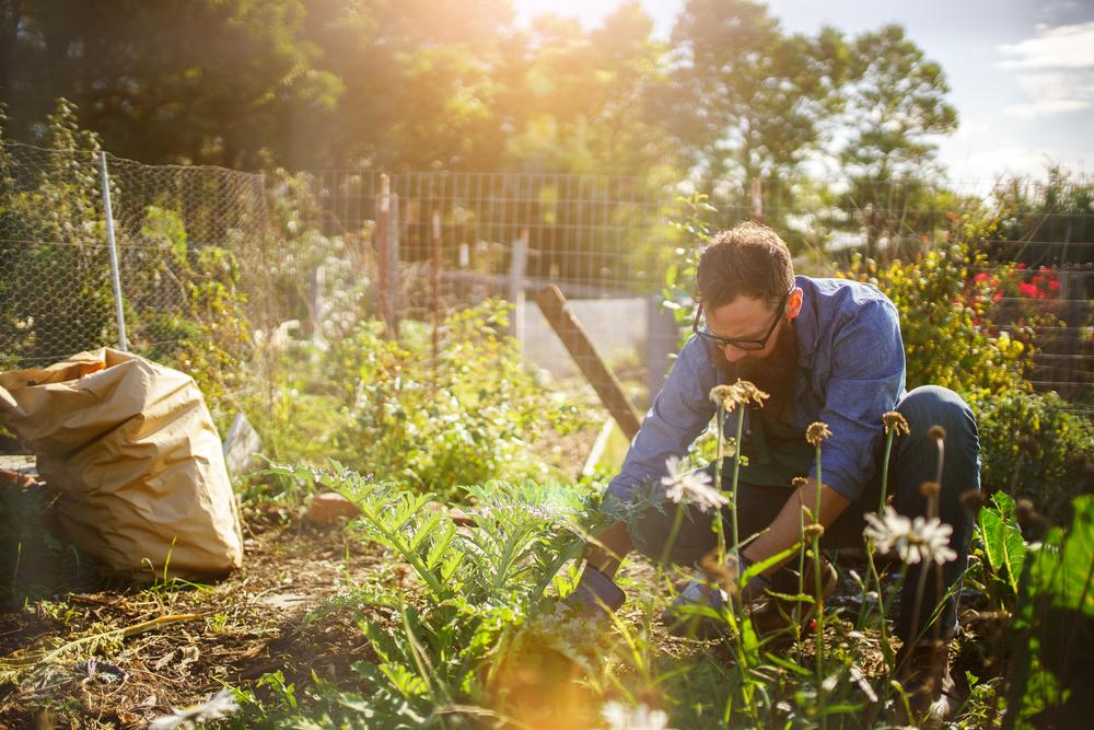 rechercher un paysagiste