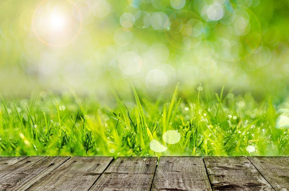 pelouse abîmée