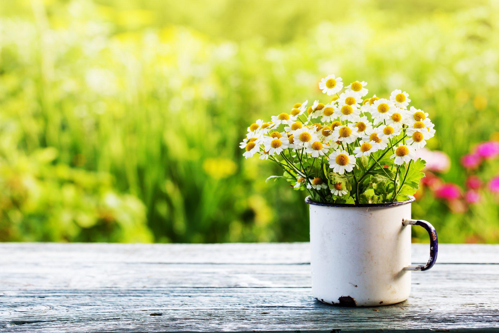 protéger plantes soleil