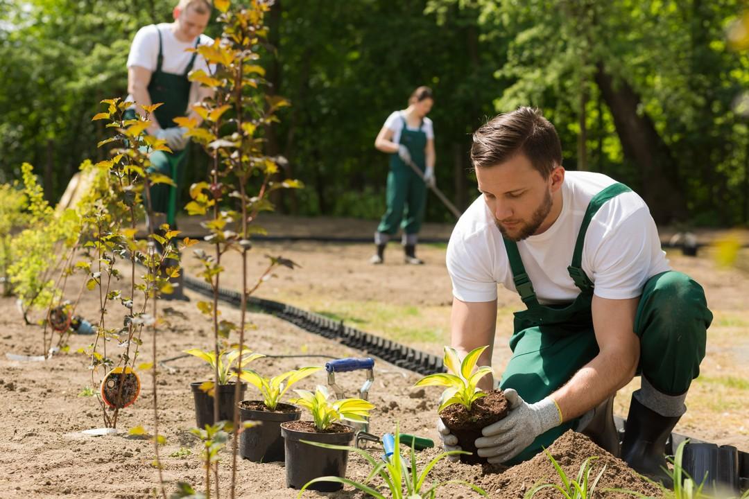 préparer jardin plantation